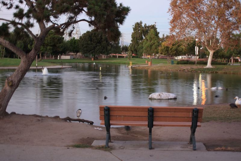 Water Tree Animal Themes Bird Outdoors Nature No People Animals In The Wild Day Beauty In Nature Sky Perching Park Serenity Peaceful Place Bench At The Park Lake