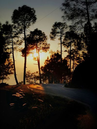The Alluring Beauty Of Sunsets EyeEm Best Shots Gpmzn Shot With A Leica Beauty In Nature Beautiful Sunset Landscape Photography The Beauty Of Ranikhet Capture Tomorrow Tree Sunset Silhouette Shadow Sky Woods Countryside Sunbeam Atmospheric Mood Tranquil Scene Idyllic