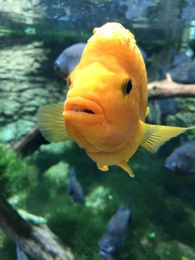 Swimming Animal