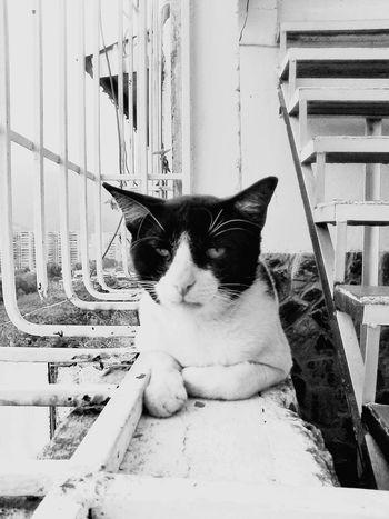 Black & White Eyemcat Cats Of EyeEm Photooftheday Open Edit