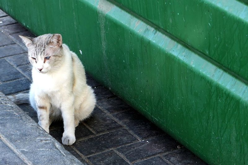 Cat sitting by green garbage can