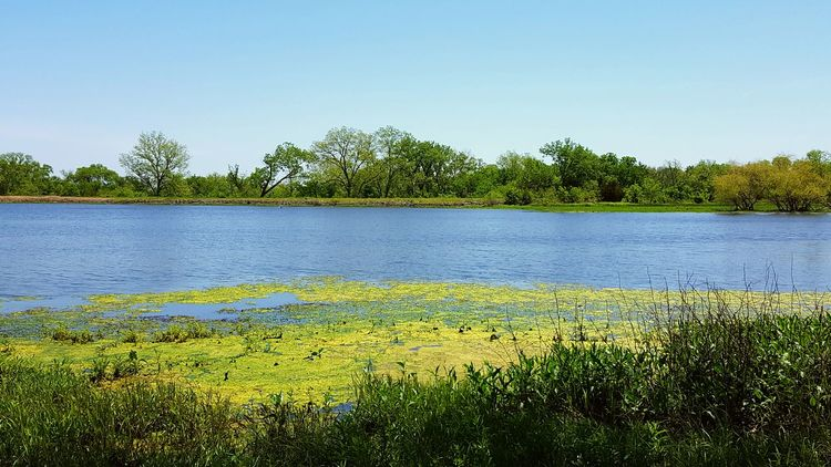 Algae on the lake. Green Nature Lakescape Blue Sky Reflections Of Life The Great Outdoors With Adobe Sunshine Makes Everything Better Spring 2016 Fishermen's Life Reflections In The Water