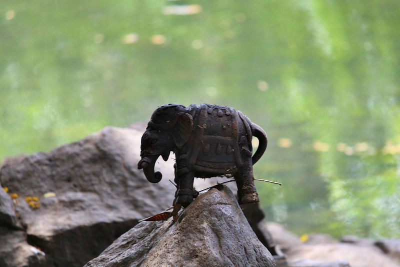 Toy Elephant on rock near pond Animals In The Wild Butterfly On Flower Elephant Toy Elephant ♥ Nature Photography Nature_collection Toy Wildlife Wildlife & Nature