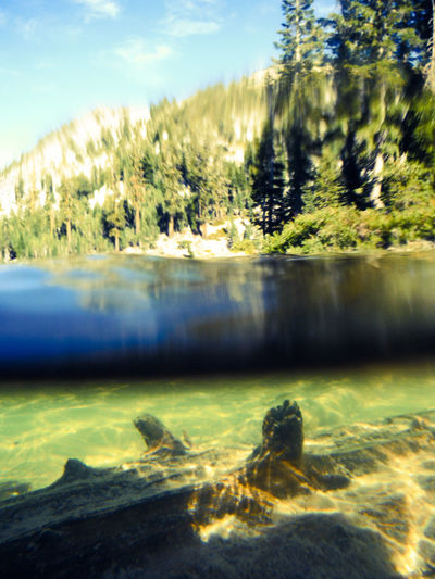 Divided Half And Half Water And Trees Fallen Tree Tree Under The Water Beneath The Surface Mountain Lake Nature Photography Tree Trunk Tree Log Underwater Tree Half In Half Out Underwater Photography Underwater World Two Worlds Land And Water Lassenvolcanicnationalpark Lassen National Park Lassennationalpark California Eyeem California Fujifilm Finepix Xp60