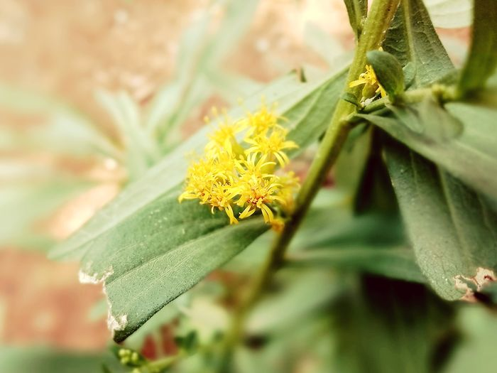 Nature Small Beauty Flowers Flower Yellow Flower Small Flower Beautiful Nature Beautiful EyeEmNewHere