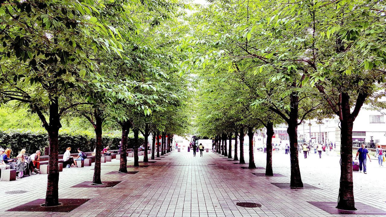 tree, plant, footpath, group of people, treelined, growth, the way forward, street, direction, park, real people, city, day, nature, incidental people, crowd, men, large group of people, women, park - man made space, diminishing perspective, outdoors