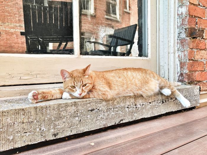 City cat Domestic Cat Pets Feline Cat Day Ginger Cat Portrait No People Outdoors Domestic Animals Animal Themes One Animal Mammal Sitting Close-up My Pet AdoptDontShop Fall The Week On EyeEm