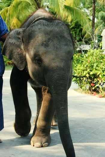 Close-up of elephant outdoors