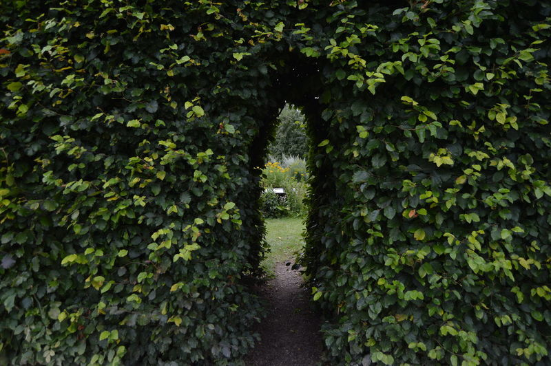 Ivy Covered Walkway In Park