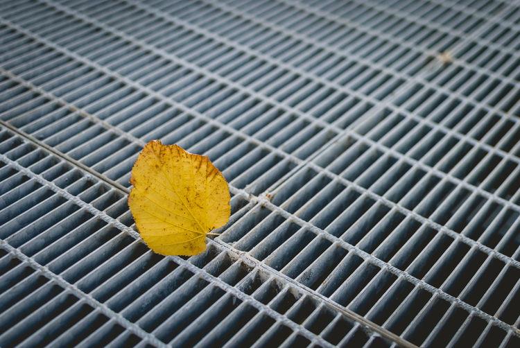 Close-up of dry autumn leaf