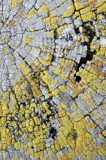 Tree Ring Backgrounds Yellow Full Frame Textured  Pattern Close-up Lichen Fungus Plant Bark Surface Rough Bark Natural Pattern