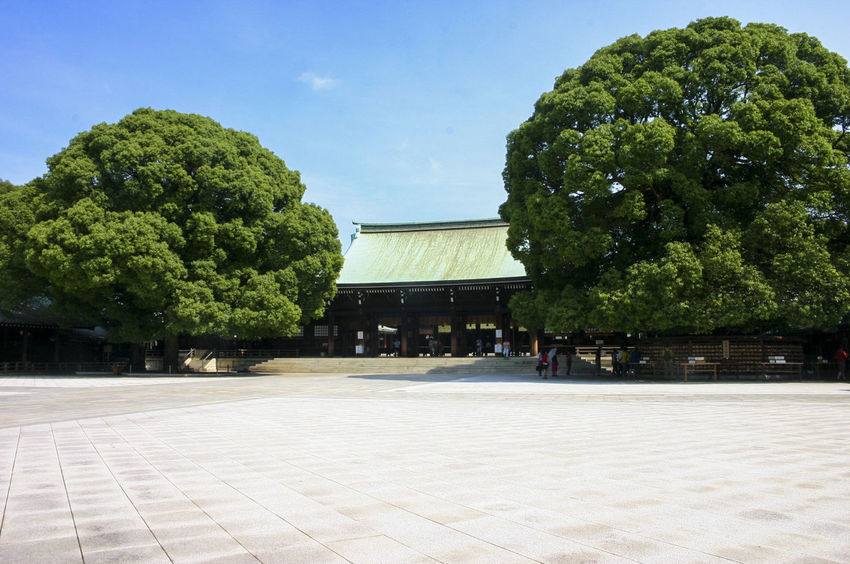 Architecture Day Growth Meiji Shrine No People Outdoors Sky Tree