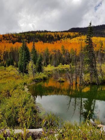 Beaver Pond Autumn Beauty In Nature Cloud - Sky Day Forest Grass Landscape Nature No People Outdoors Pine Tree River Scenics Sky Tranquil Scene Tranquility Tree Water WoodLand