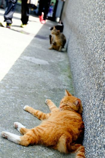Houtong, Taiwan Taiwan Travel Photography 台湾 Fujifilm Houtong Fujifilm_xseries Fujifilm X-E2 Fujixe2 Cat 猫