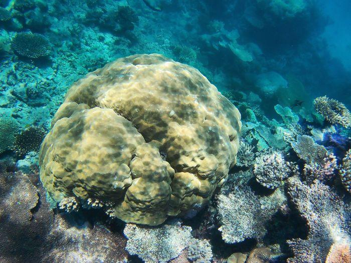 Day Water Underwater Sea Beauty In Nature Sea Life Swimming UnderSea Nature Coral No People Scenics ~ Greatbarrierreef Cairns, North Queensland, Australia