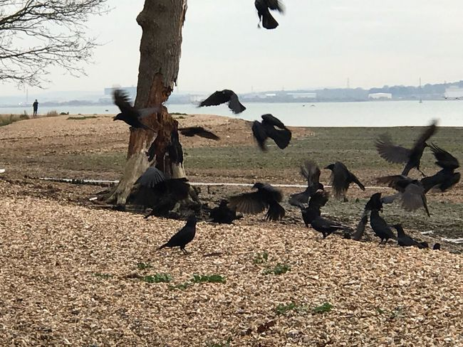Animal Themes Animals In The Wild Bird Large Group Of Animals Nature Animal Wildlife Sea Day Water No People Beauty In Nature Outdoors Tree Perching Sky Pelican Mammal Crow