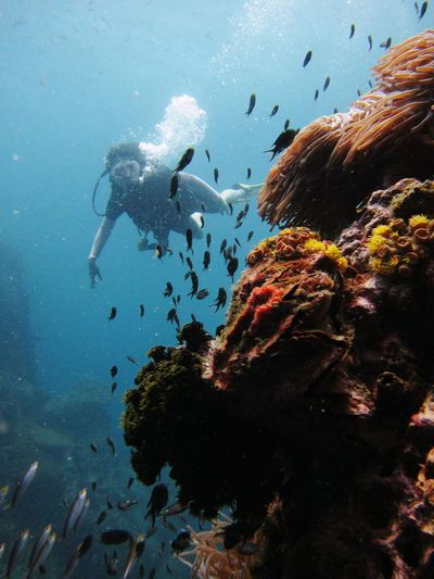 Close-up of scuba diver with fish swimming in sea