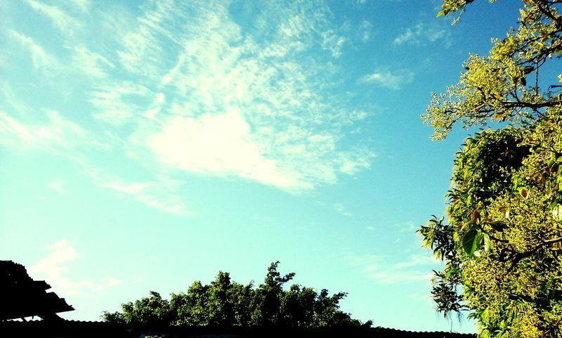 Lindo día