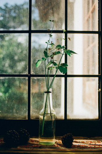 Plant In Bottle On Window Sill