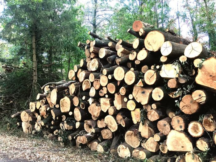 Save the nature Firewood Deforestation Stack Forest Lumber Industry Large Group Of Objects Abundance WoodLand Timber Tree Wood - Material Woodpile Wood Fossil Fuel Environmental Issues Fuel And Power Generation Pile Forestry Industry