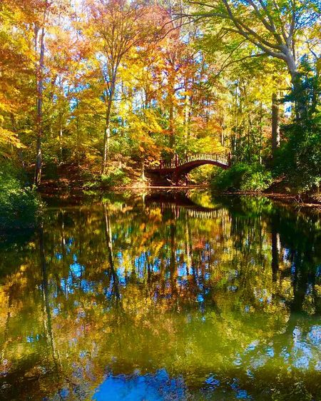 College Life Reflection Nature Tree Water Lake Forest Beauty In Nature Tranquility Outdoors Leaf Autumn Wilderness Day Growth Standing Water