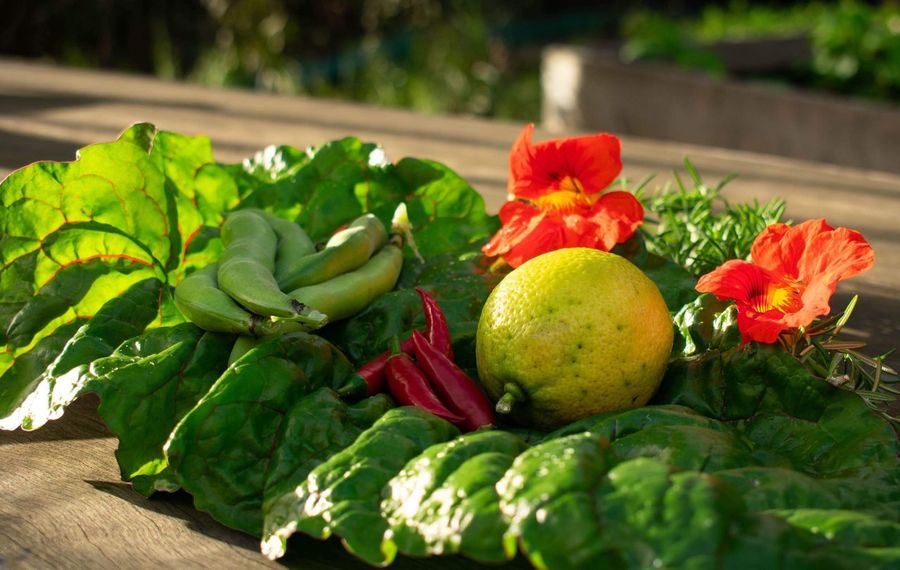 Fresh produce Food Photography Local Food Freshness Leaf Green Color Healthy Eating Food And Drink