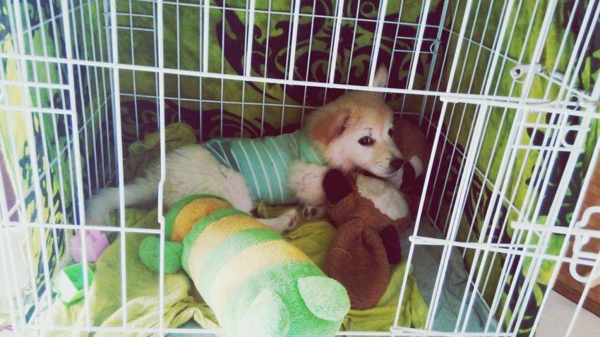 Dont disturb please... PuppyLove Dog Doglover Pets Animals Balidog My Little Puppy Sleepypuppy Puppyeyes Puppylife