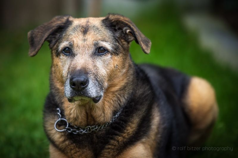 Dog Domestic Animals Animal Themes Pets One Animal Mammal Looking At Camera Focus On Foreground No People Portrait Day Close-up Outdoors