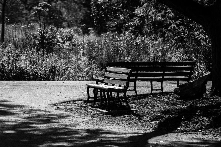 ©Amy Boyle Photography Bench Relaxing Sit Sitting Take A Seat Absence Bench Benches Day Empty Nature No People Outdoors Park - Man Made Space Relaxation Shadow Sunlight Take A Break Tree