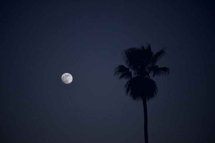 Low angle view of silhouette coconut palm tree against sky at night
