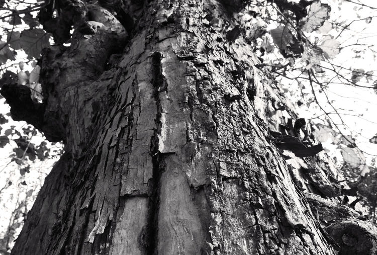 A goo old experienced tree... Showcase April Bark Bark Texture Black And White Experience Nature Old Skin Of Tree Old Tree Outdoors Textured  The Cut Mark Tree Tree Trunk