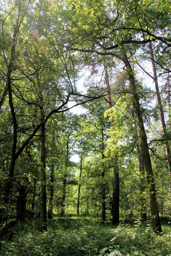 Forest Green Color Nature Outdoors Park Tree Wild Wildpark Alte Fasanerie