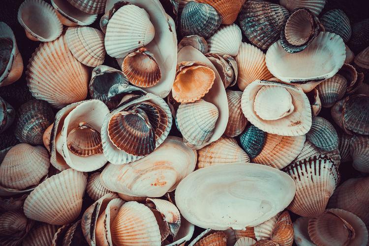Full frame shot of sea shells