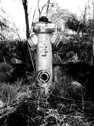 Blackandwhite Black And White Black & White Hydrant Wather