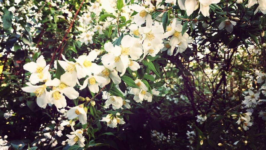 Flowers Belgium