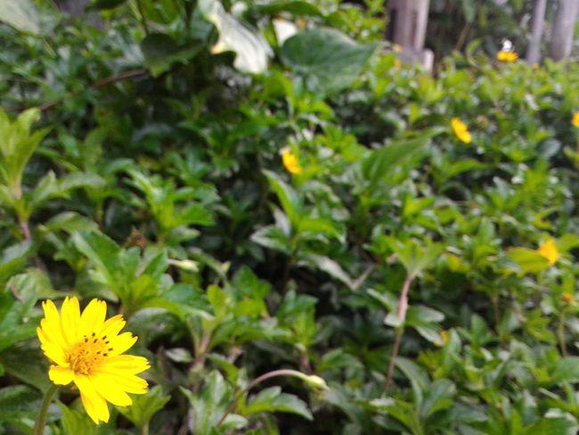 Flowers Yellow Flowers Plants And Flowers Plants 🌱 Flowers,Plants & Garden First Eyeem Photo