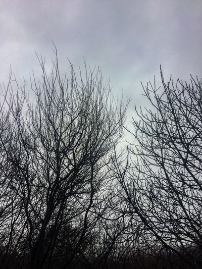 Sky Bare Tree Nature Tree Low Angle View No People Beauty In Nature Outdoors Branch Tranquility Day
