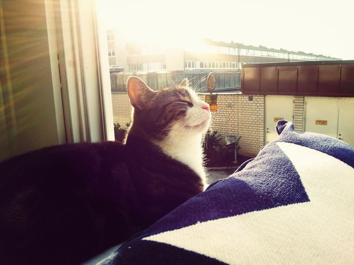Tobbe loves the sun! Relaxing Enjoying Life My Cat Love The Sun On My Face