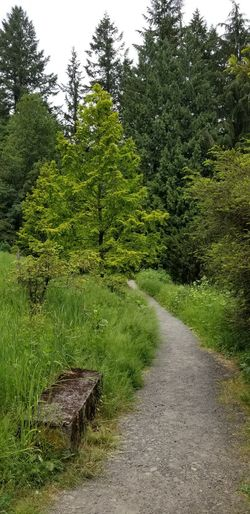Washington Park hike No Filter Purist No Edit No Filter Bench Nature Pathway Day Trees Plants Springtime Tree Water Forest Grass Sky Green Color Lush - Description Lush Foliage Greenery Growing Tranquil Scene Woods Tranquility Calm Lush The Great Outdoors - 2018 EyeEm Awards