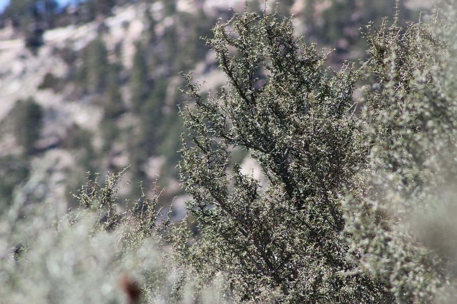 Experimenting... Experimenting With Different Effects Greasewood Mountains In Background Shrub Blur Effect Big Horn Mountains Wyoming