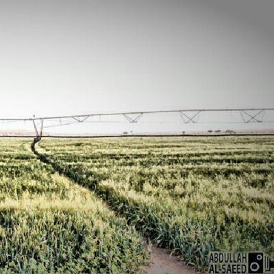 مزرعة Farm