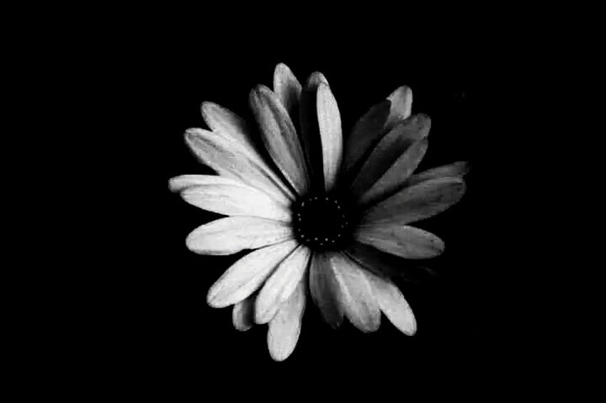 Flower Flowers Flowers In My Garden Bew Flower BeW Black & White Blackandwhite Photography Keep Calm And Snap On Garden