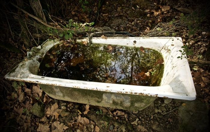In the forest bathroom Nature Plant Abandoned No People Outdoors Old Forest Water Bathtub Obsolete Basque Country