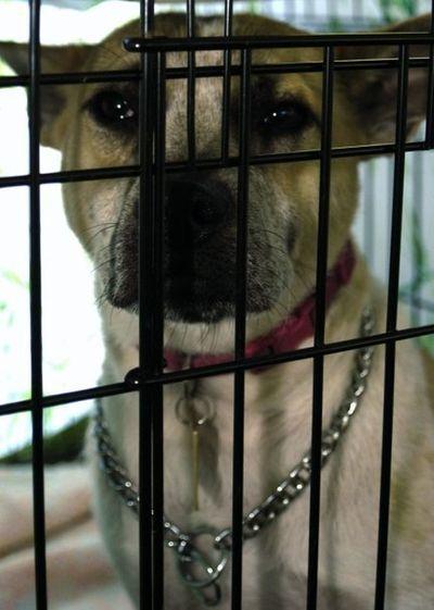Adoption Dog Adoption Humane Society Abandoned Animals Aspca Dog Stray