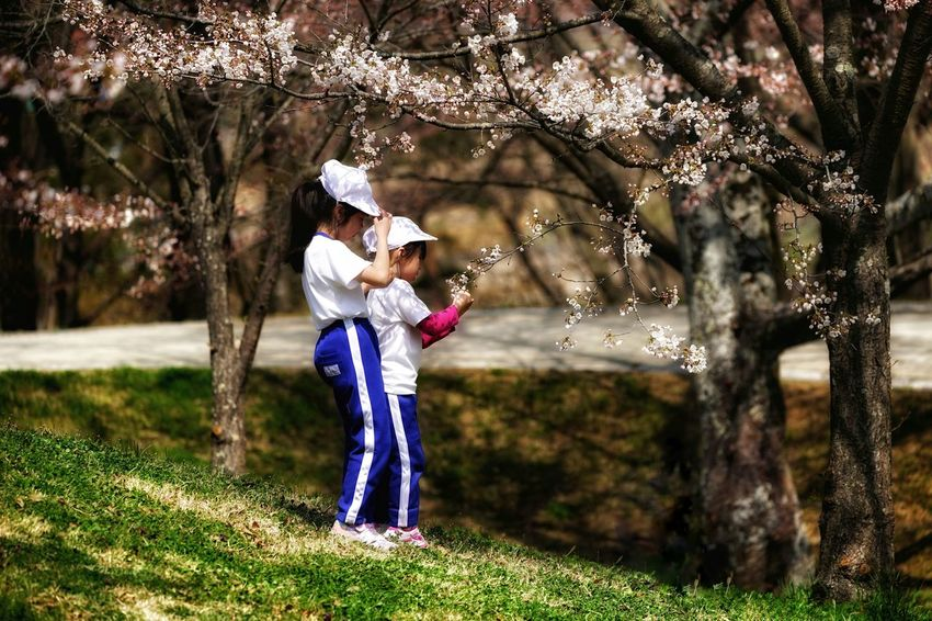 Capture The Moment Uzukiの桜 Depth Of Field Softness Springtime Children Only Kids Full Length Sakura Cherry Blossoms Uzuki Of The Flower Fragility Fine Art Beauty In Nature Light And Shadow Snapshots Of Life Uzu St. Photography Themes Fantastic Fantasy Full Frame Detail Sigma EyeEm Best Shots 17_04 EyeEmNewHere The Photojournalist - 2017 EyeEm Awards The Portraitist - 2017 EyeEm Awards The Street Photographer - 2017 EyeEm Awards Live For The Story