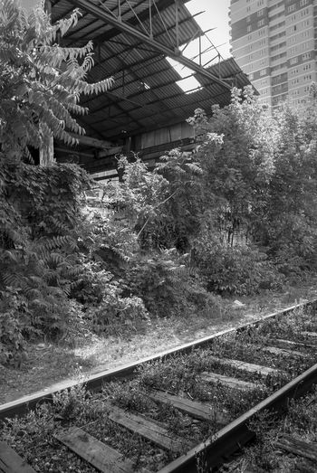 Abandoned Abondoned Architecture Beauty In Nature Black And White Built Structure Day DISUSED Disusedrailways Growth In Nature No People Outdoors Plant Tree