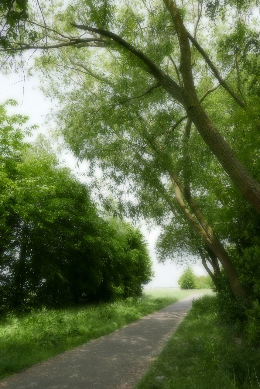 tree, the way forward, nature, road, day, tranquility, outdoors, landscape, green color, no people, grass, growth, tranquil scene, beauty in nature, scenics, forest, plant, sky
