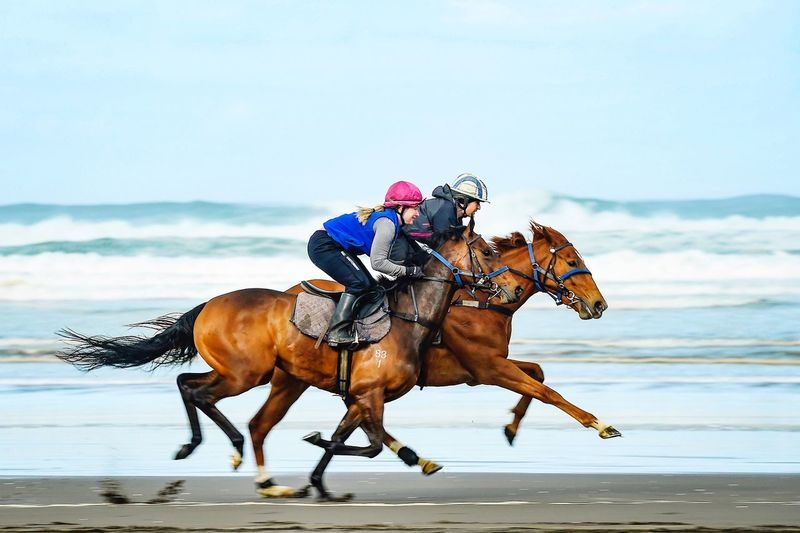 Beach gallop Horse Training Black Beach Sand Horse Riding Horseback Riding Jockey Speed Sport Running Horse Racing Sports Helmet Motion Activity Outdoors
