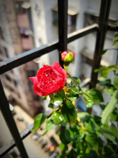 balcony gardening Flower City Red Close-up Architecture Building Exterior