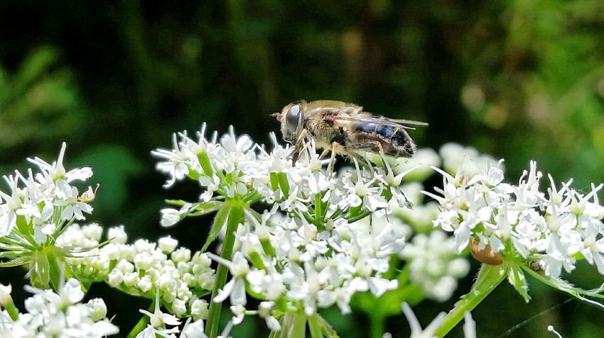 Hardworking little bee Hardworking Insect Nature Is Amazing Little Animal Nature On Your Doorstep Nature Insects Collection Insect Photography The Essence Of Summer